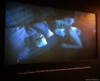 """Kubrick and """"Eyes Wide Shut"""" - Eros and Thanatos"""